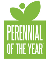 Perennial of the Year
